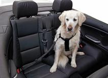 Säkerhetsbälte till hund M