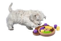 PAW - Aktiveringspussel för hund